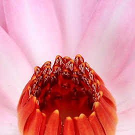 Water Lily close up by Richard Simpson - Nature Up Close Other plants