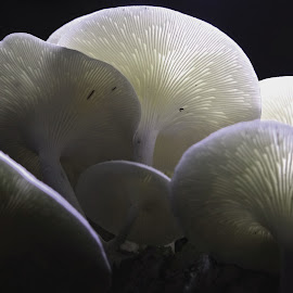 me at night by Asif Bora - Nature Up Close Mushrooms & Fungi (  )