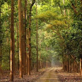 Rajaji National park by Subas Bishwal - Landscapes Mountains & Hills