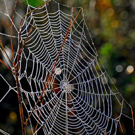 by Albina Jasinskaite - Nature Up Close Webs