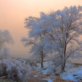 Sleeping.. by Dennis Ducilla - Landscapes Prairies, Meadows & Fields ( pogonip., cottonwood.trees, fog, nevada, freezing fog, golden )