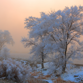 Sleeping.. by Dennis Ducilla - Landscapes Prairies, Meadows & Fields ( pogonip., cottonwood.trees, fog, nevada, freezing fog, golden )