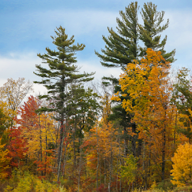 Autumn by Nancy Merolle - Landscapes Forests ( color, autumn, fall, vermont, leaves, usa )