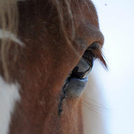 Stare down by Liz Childs - Animals Horses ( horse, eye,  )