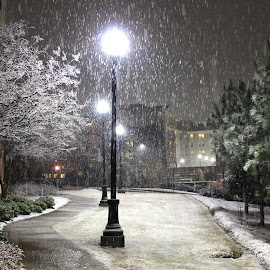 The Yearly Snowfall by Brianne Cronenwett - Novices Only Landscapes ( snowfall, college, alabama, tuscaloosa, lamps, snow, lamp, path, buildings, night, lamp post, lamp posts, sidewalk, campus )