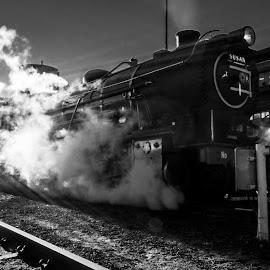choo choo by Farrah-Diba Sing - Transportation Trains ( black and white, johannesburg, steam train, train, trains )