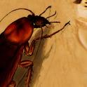 蟑螂 icon