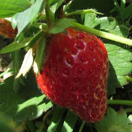 Strawberry by Pauline Abreu - Food & Drink Fruits & Vegetables