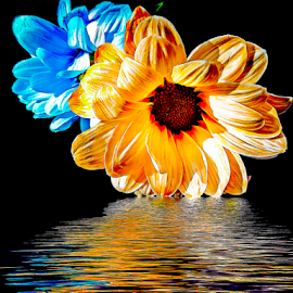 twoo flowers by LADOCKi Elvira - Digital Art Things ( nature, color, flowers, garden )