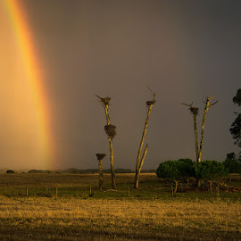 Rainbow of Hope by Rossana Ferreira - Landscapes Prairies, Meadows & Fields ( tree, sunset, alentejo, evora, portugal, rainbow )