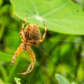 Spider by Jean Bogdan Dumitru - Novices Only Wildlife