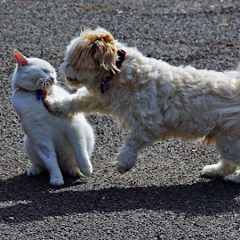 Unusual Playmates by Mark Hurkmans - Animals - Dogs Playing ( playing, cat, animals, dog )
