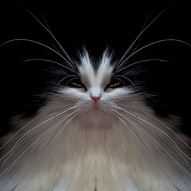 Pasport photo by Jurijs Ratanins - Instagram & Mobile Other ( look, mobilography, cat, wiskers, pet, portrait )
