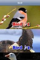 Screenshot of Bird Alarm
