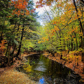 A River runs through it. by Christine Weaver-Cimala - Landscapes Forests ( water, canon, colorful, forest, landscape, leaves, woods, michigan, nature, color, fall, ledges, river )