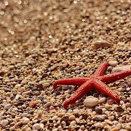 by Nikša Šapro - Nature Up Close Sand (  )