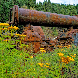 Industrial Graveyard by Barbara Brock - Artistic Objects Industrial Objects ( yellow flowers, antique machinery, wildflowers, machinery, rusty machinery )