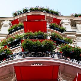 Red by Onur Genes - Buildings & Architecture Architectural Detail ( paris, building, red, france, big, flowers )