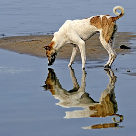 This Dog likes his shadow by Arindam Chakrabarty - Animals - Dogs Playing