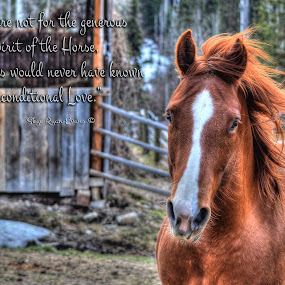 Flame - Horse Photo & Poem by Skye Ryan-Evans - Typography Quotes & Sentences ( equine photography, mare, horse-poetry, horse and barn, horse-lovers, spirited horse, horse, sorrel mare, running horse, ranch horse, horse poem )