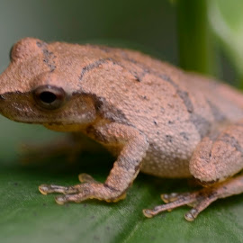 by Curt Perry - Animals Amphibians