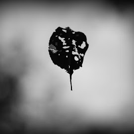 Lonely leaf  by Dale Carney - Nature Up Close Leaves & Grasses ( leaves, hiking )