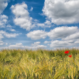 Two of a kind by Dominic Schroeyers - Nature Up Close Leaves & Grasses ( clouds, two, rose, red, sky, blue, grain, summer, wild rose, yellow, alone, flower )