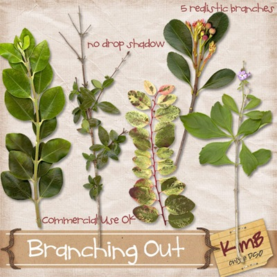 kb-branchingout_preview