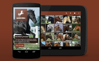 Screenshot of iKnow Horses 2 LITE