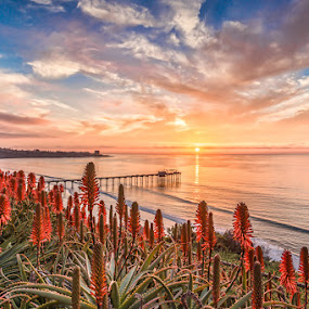 Aloe Veras and Sunset by Wenjie Qiao - Landscapes Sunsets & Sunrises ( ja lolla, aloe veras, scripps pier, sunset, ocean )