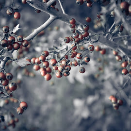 Autumn by Anna Klobuch - Nature Up Close Trees & Bushes ( macro, red, autumn, grey, autumn colors )