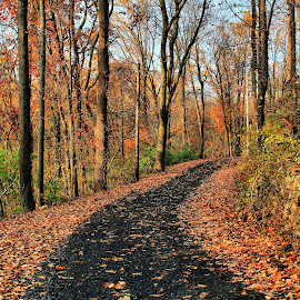 Autumn country road by Tina Wiley - City,  Street & Park  Street Scenes ( rock wall, orange, autumn leaves, colors, street, pennsylvania, road, country, country road, nature, autumn, fall, crunchy, trees, autumn colors )