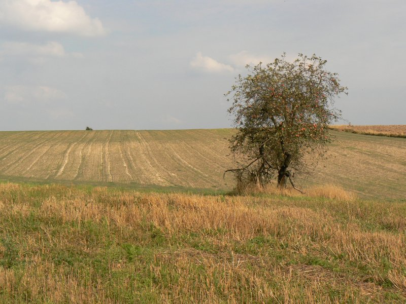 Okolice Wólki Łagowskiej