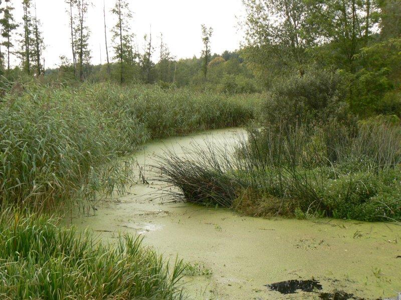 Rzeka Zwoleńka