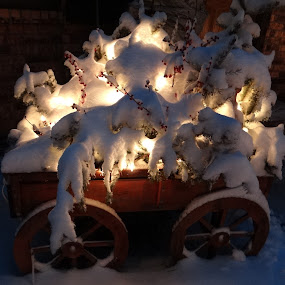 Magical. by Carolyn Kernan - Public Holidays Christmas ( mood, mood factory, holiday, christmas, hanukkah, red, green, lights, artifical, lighting, colors, Kwanzaa, blue, black, celebrate, tis the season, festive, decoration, object,  )