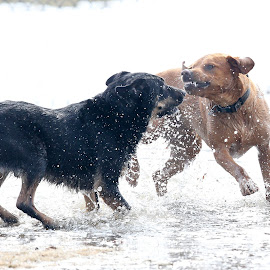 Smile by Peter Marzano - Animals - Dogs Playing