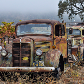 Old Winery Trucks by Anthony Negron - Transportation Automobiles ( trucks, california, rust, antique, winery, calistoga )