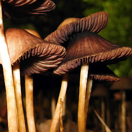 by Ad Spruijt - Nature Up Close Mushrooms & Fungi