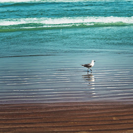 The Bird by Kat Donovan - Landscapes Beaches ( sand, seagull, waves, katdonovanphotography, cocoa beach,  )