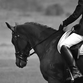 Contact by Jessica Hensley - Animals Horses ( competing, rider, dressage, black and white, horse )