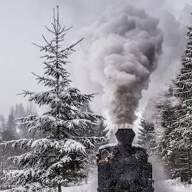 Prin zapada... by Sveduneac Dorin Lucian - Transportation Trains ( winter, train, romania, transportation, landscape )