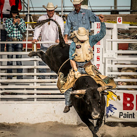 Bull Riding1 by Troy Wheatley - Sports & Fitness Rodeo/Bull Riding ( cowboy, riding, rodeo, bucking, dirt, bull,  )