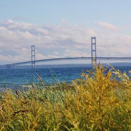 September at the Straits by Tina Stevens - Landscapes Travel ( clouds, water, shore, mackinac, straits, grass, lakes, lake, yellow, travel, landscape, panorama, mackinaw, blue, autumn, fall, shoreline, gold, bridge )