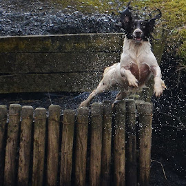 Some fun in the river! by Claire Bell - Animals - Dogs Playing