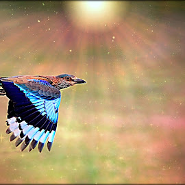 Flight to Freedom by Prasanna Bhat - Digital Art Animals ( stars, light, birds, universe, sun, indian roller )