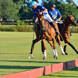 West Palm Beach Polo by Terry Barker - Sports & Fitness Other Sports ( west palm beach polo )