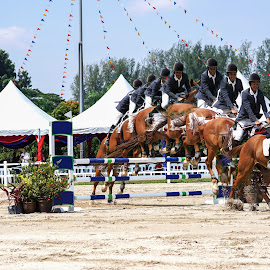 International Horse show 2014 @ KL by Lily Chang - Sports & Fitness Other Sports ( horse riding, horse, sports, changlam, horse show, animal )