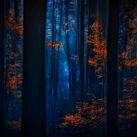 Autumn in our hearts by Mihail Dulu - Landscapes Forests ( blue, autumn, forest, october, landscape, light )
