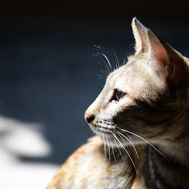 The Poser. by Ajinkya Bhonde - Animals - Cats Portraits ( cats, cat face, cat, cat eyes, cat portrait )