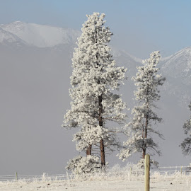 Frost and Snow by Kansas Allen - Landscapes Mountains & Hills ( ranch, canada, frost, farm, field, fence, winter, cold, snow, trees, weather, bc, lillooet )